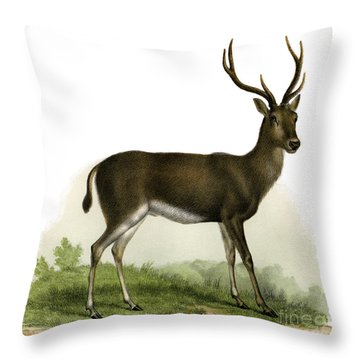 A Red Deer In A Landscape, 1860 Throw Pillow