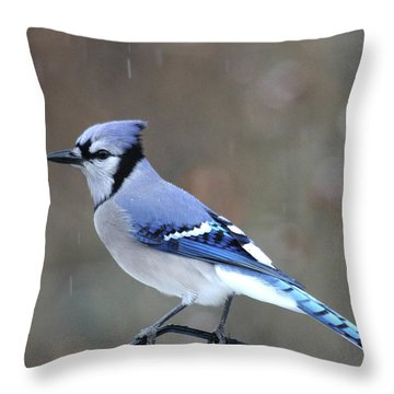 A Snowy Day With Blue Jay Throw Pillow