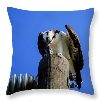 A Tasty Lunch Throw Pillow