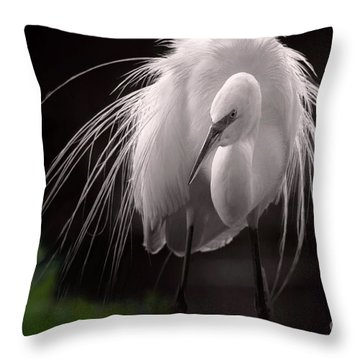 A Touch Of Class - Great Egret With Plumage Throw Pillow