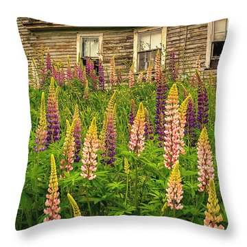 Abandoned Maine Farm Lupines Throw Pillow