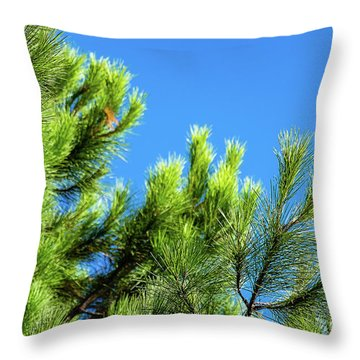 Adriatic Pine Against Blue Sky  Throw Pillow