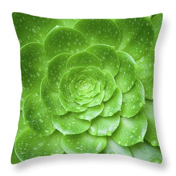 Throw Pillow featuring the photograph Aenomium 3916 by Mark Shoolery