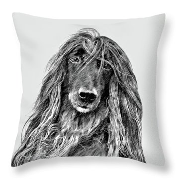 Afghan Hound 3 Throw Pillow