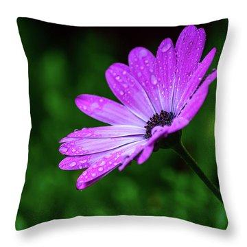African Daisy II Throw Pillow