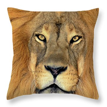 African Lion Portrait Wildlife Rescue Throw Pillow
