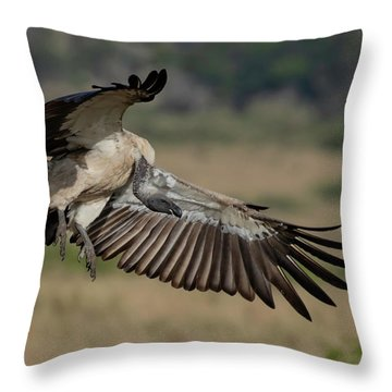 African White-backed Vulture Throw Pillow