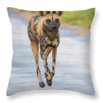 African Wild Dog Bouncing Throw Pillow