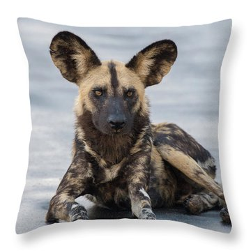 African Wild Dog Resting On A Road Throw Pillow