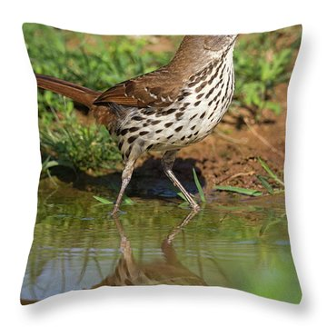 Alert Thrasher Throw Pillow