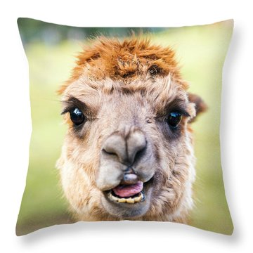 Throw Pillow featuring the photograph Alpaca by Rob D Imagery