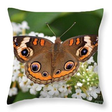 Amazing Beauty - Common Buckeye Throw Pillow