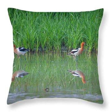American Avocet Pair Throw Pillow