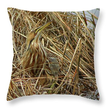 Throw Pillow featuring the photograph American Bittern by Debbie Stahre