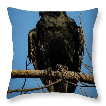 Throw Pillow featuring the photograph American Crow by Lora J Wilson