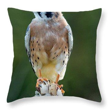 American Kestrel 9251502 Throw Pillow