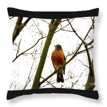 American Robin Perching In A Wintertime Tree Throw Pillow
