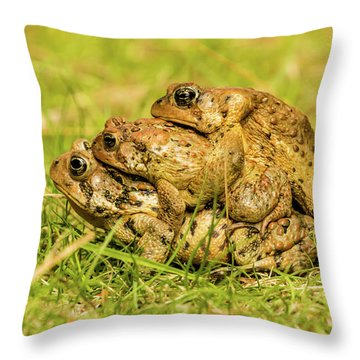American Toad Western Brooke Pond, Grose M Throw Pillow