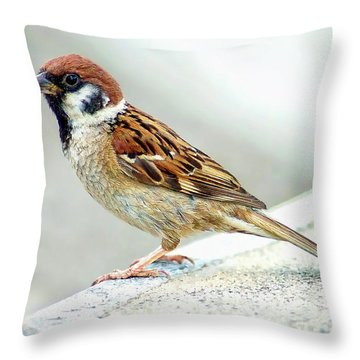 Throw Pillow featuring the photograph American Tree Sparrow by Anthony Dezenzio