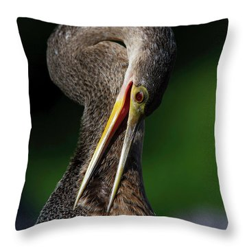 Anhinga Combing Feathers Throw Pillow