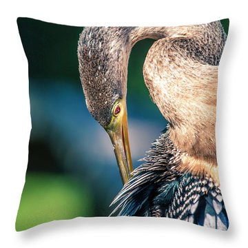 Anhinga Grooming Throw Pillow
