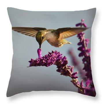 Anna's Hummingbird Sipping Nectar From Salvia Flower Throw Pillow