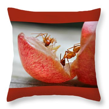 Throw Pillow featuring the photograph Ants by Candice Trimble