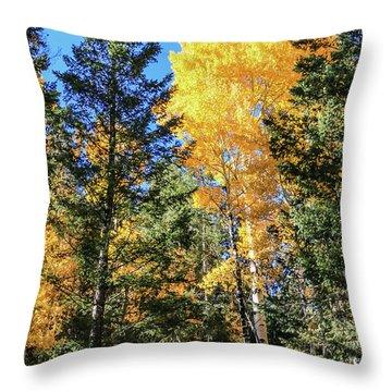 Arizona Aspens In Fall 5 Throw Pillow