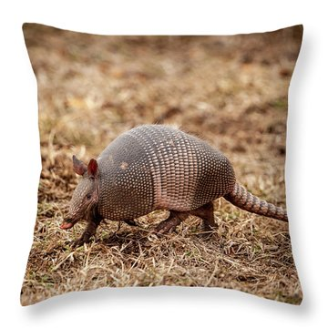Throw Pillow featuring the photograph Armadillo by Jeff Phillippi