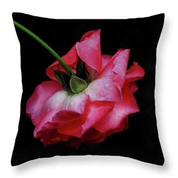 Pink Rose Takes A Bow Throw Pillow