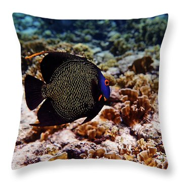 Throw Pillow featuring the photograph Aruban French Angelfish by Lars Lentz