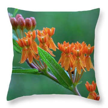 Throw Pillow featuring the photograph Asclepias Tuberosa by Dale Kincaid