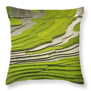 Asian Rice Field Throw Pillow