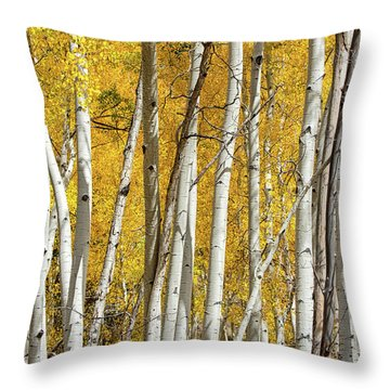 Aspen Autumn Throw Pillow
