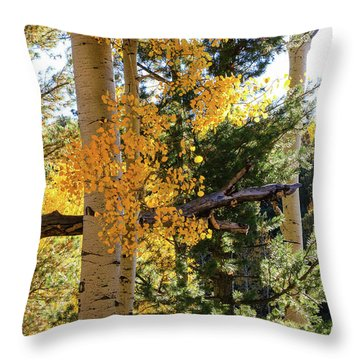 Aspen Tree Close Throw Pillow