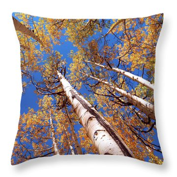 Throw Pillow featuring the pyrography Aspen Trees Against The Sky In Crested Butte, Colorado.   by OLena Art Brand