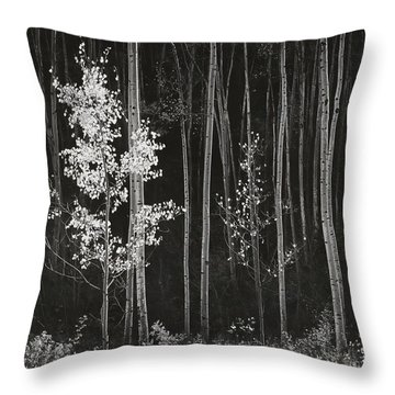 Aspens Northern New Mexico Throw Pillow