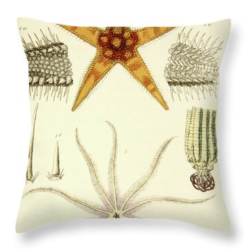 Asterias Aurantiaca And Comatula Carinata, From The Mollusca And Radiata Throw Pillow