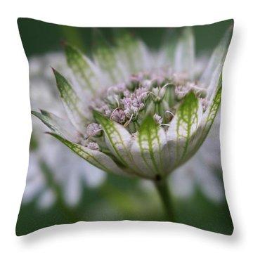 Astrantia Throw Pillow