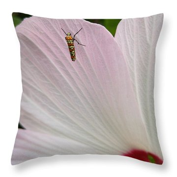 Atteva Aurea 1 Throw Pillow