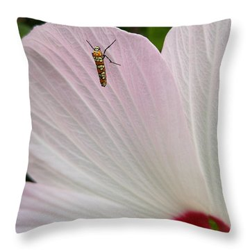 Throw Pillow featuring the photograph Atteva Aurea 1 by Carl Young