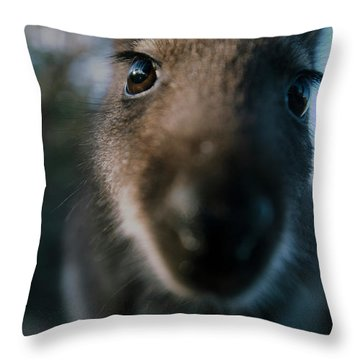 Australian Bush Wallaby Outside During The Day. Throw Pillow