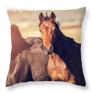Australian Horses In The Paddock Throw Pillow