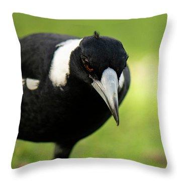 Australian Magpie Outdoors Throw Pillow
