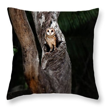 Throw Pillow featuring the photograph Australian Masked Owl by Rob D Imagery