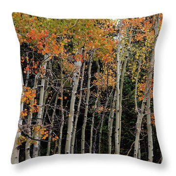 Throw Pillow featuring the photograph Autumn As The Seasons Change by James BO Insogna