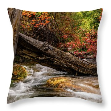 Throw Pillow featuring the photograph Autumn Dogwoods by TL Mair