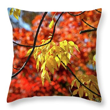 Throw Pillow featuring the photograph Autumn Foliage In Bar Harbor, Maine by Bill Swartwout Fine Art Photography
