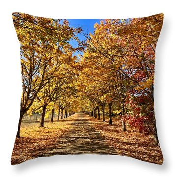 Throw Pillow featuring the photograph Autumn Road by Brian Eberly