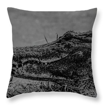 B And W Gator Throw Pillow